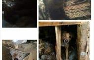 "HUMANA AKCIJA AKTIVISTKINJA ""ANIME"": SPASILE MUKA DESET ŽIVOTINJA"